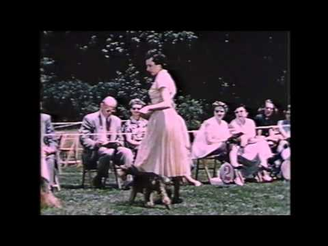 American Kennel Club - The dog show and you - 1954