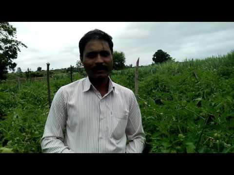 24 Carat Organic Pvt ltd
