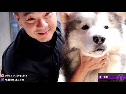 Siberian Husky & Alaskan Malamute Dog Compilation #1