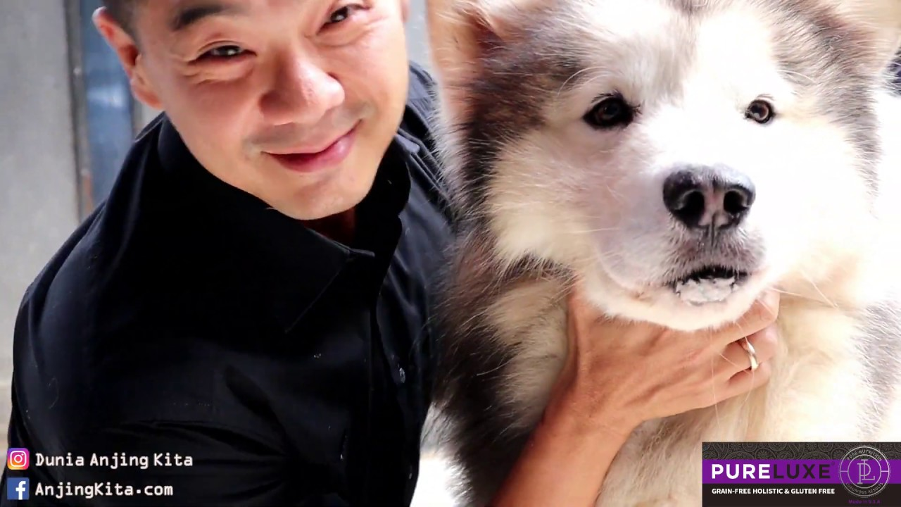 Siberian Husky Alaskan Malamute Dog Compilation 1 Youtube