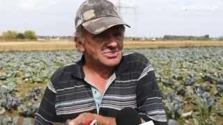 Susza uderza w producentów warzyw