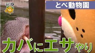 今回のチャレンジみきゃんは砥部動物園で「カバのエサやり!」に挑戦!...