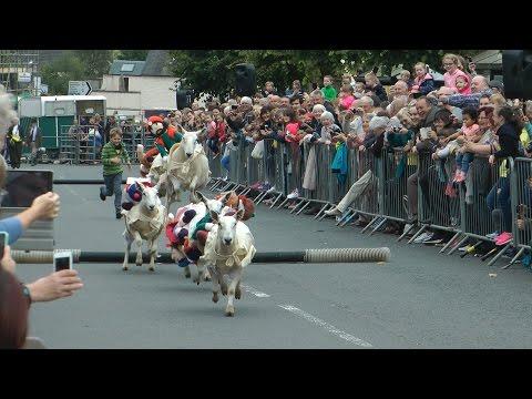 Moffat Sheep Races 2016