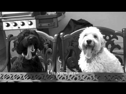 Un Ami - Nicola Ciccone (music video)