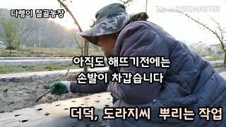 유공비닐에 더덕- 도라지씨 뿌리는 방법 영상