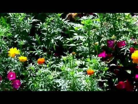 Low Cost & Low Maintenance Flower Garden