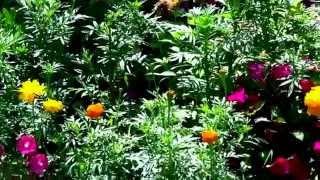 Low Cost & Low Maintenance Flower Garden