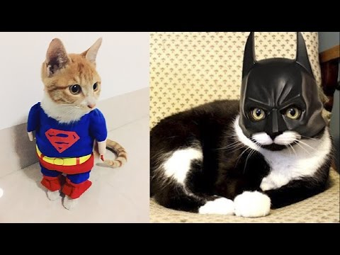 SuperHeroes in Real Life As Cats