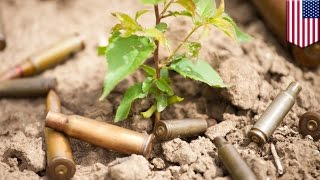 Biodegradable bullets: seeds inside ammunition grow into plants after bullets fired - TomoNews