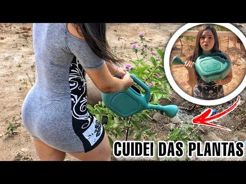 AGUEI AS PLANTAS DA MINHA MÃE   O QUINTAL ESTÁ FICANDO FLORIDO
