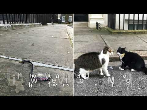 Downing Street cats involved in fierce brawl