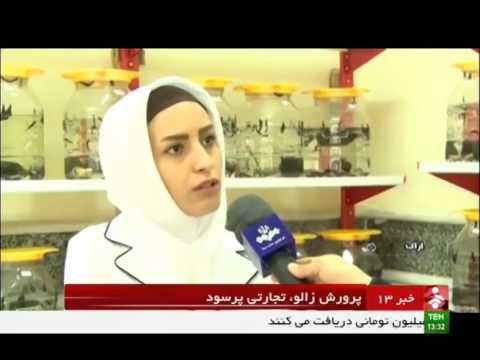 Iran Breeding leeches for Medical usage & Export پرورش زالو براي پزشكي شهرستان اراك ايران