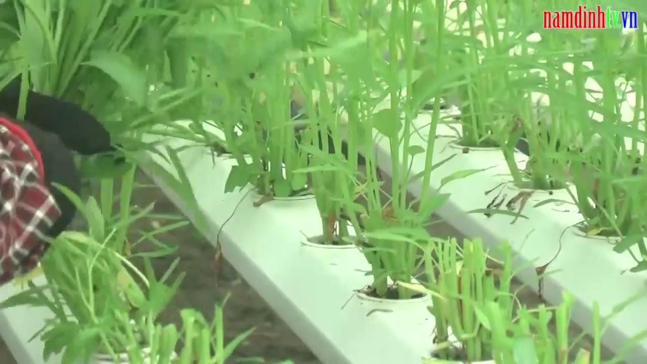 Nông nghiệp công nghệ cao   Mỹ Tân, Mỹ Lộc, Nam Định online video cutter com