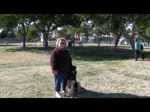Southern Nevada k9 Training - Dog training in Las Vegas, NV.