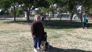 Southern Nevada K9 Training - Dog Training In Las Vegas, Nv.