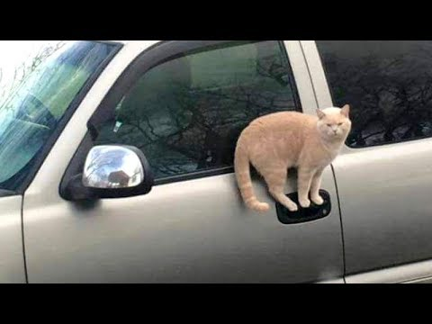 CATS make us LAUGH ALL THE TIME! – Ultra FUNNY CAT videos