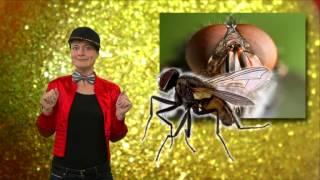 waarom wrijft een vlieg in zijn voorpootjes? het klokhuis
