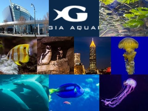 A trip to Georgia Aquarium - Jan 2017