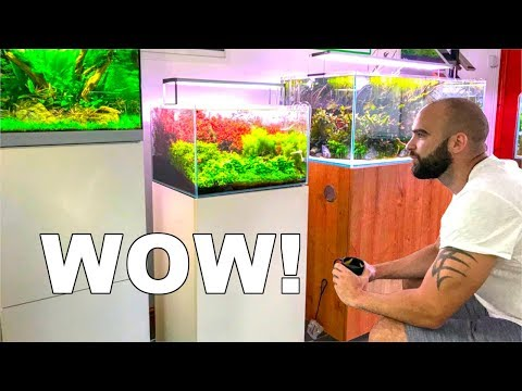 I've NEVER Seen Fish Tanks Look This Good ᴴᴰ - Aquarium Gardens UK - Full Aquascaping Shop Tour
