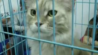 Выставка кошек Кемерово