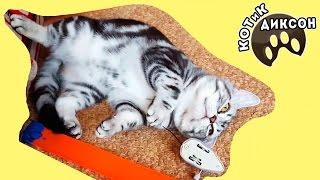 🐾😺  Смешные моменты с котиком Диксоном. Сборник Видео из серии Смешные кошки
