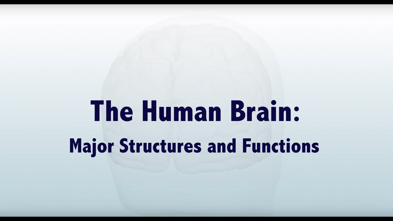 Download The Human Brain: Major Structures and Functions