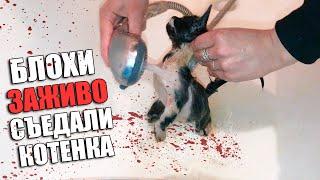 Download Спасение котенка. Котенок ищет дом / SANI vlog Mp3 and Videos