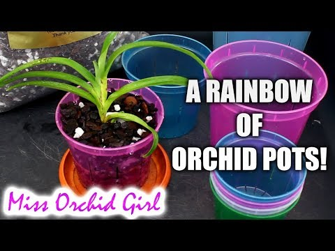 Slotted pots for Orchids from rePotme - A comprehensive review