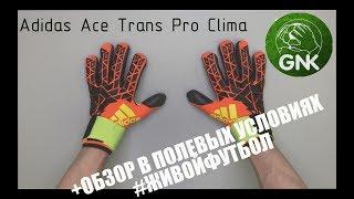Обзор + Тест Вратарских Перчаток Adidas Ace Trans Pro Clima от Gloves N' Kit