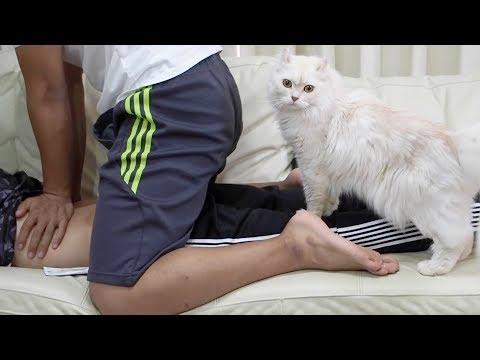 マッサージを手伝ってくれる猫