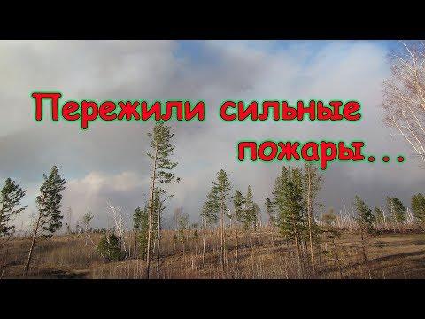 Сильные пожары вокруг нашего села. Как это было. (05.19г.) Семья Бровченко.