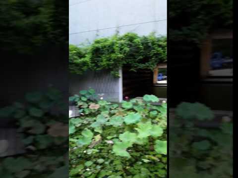 American in Taiwan - Patio garden at art school in Taipei between two buildings gorgeous