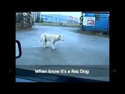 Rez Dog Dancing