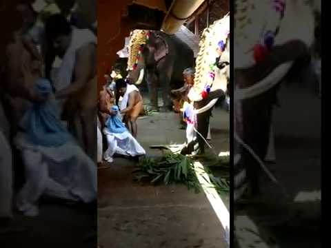 Kerala elephant attack youtube - photo#45