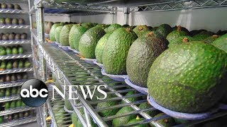 Say goodbye to overripe avocados thanks to new natural tech from food startup