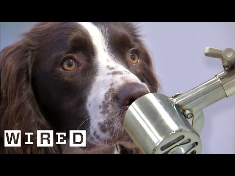 Scientist Explains Why Dogs Can Smell Better Than Robots | WIRED