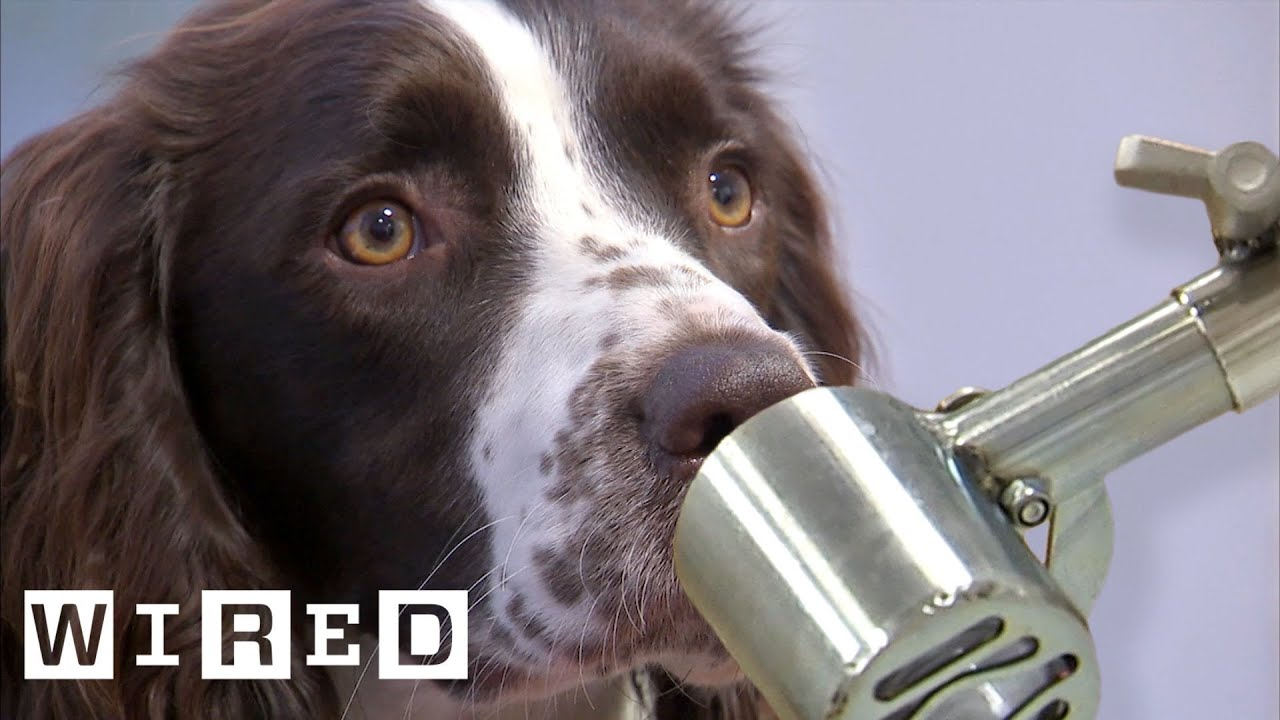 Scientist Explains Why Dogs Can Smell Better Than Robots | WIRED – WIRED