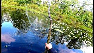 ЗДОРОВЕННЫЕ КАРАСИ на ПАУК. РЫБАЛКА ПАУКОМ-ПОДЪЕМНИКОМ. КАК ловить рыболовным ПАУКОМ.