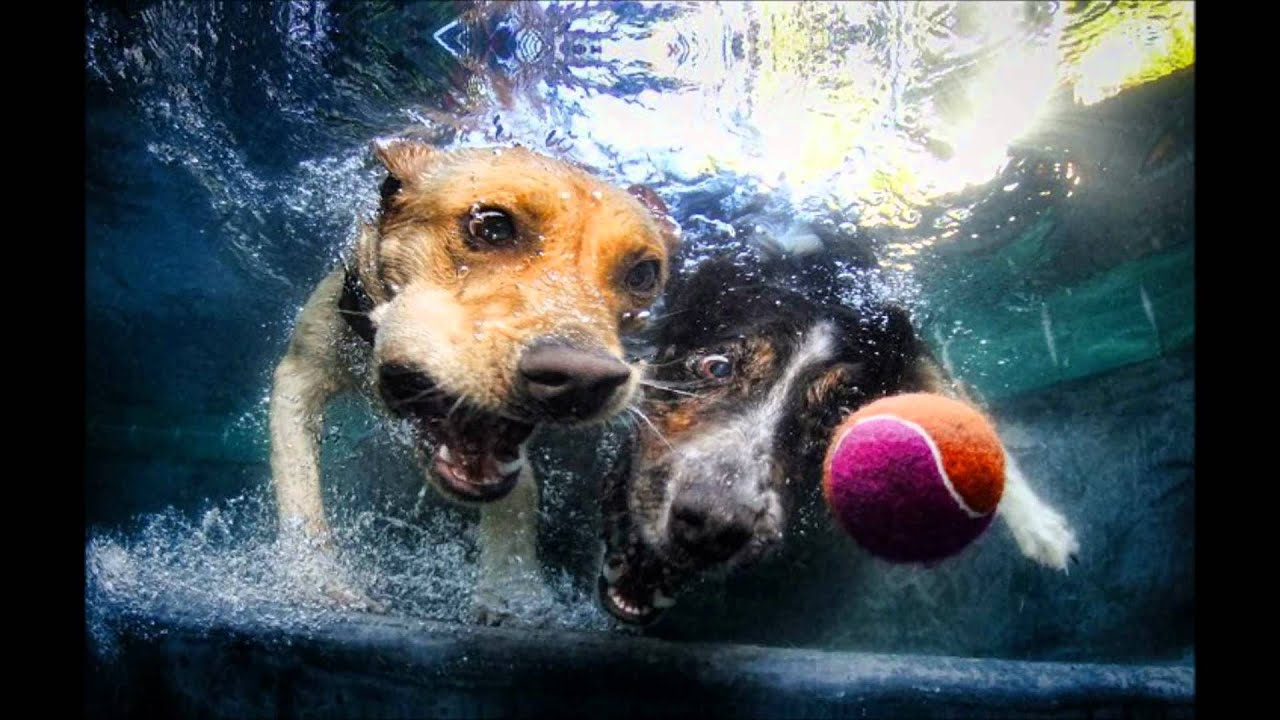 Babies Wallpaper Cute Underwater Dogs Youtube