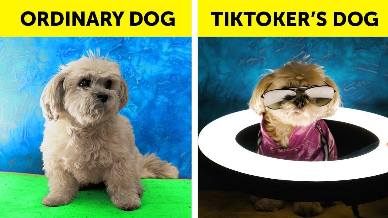 Top Funny Pet Hacks #shorts