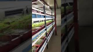 경기도 연천 인삼 담액수경재배 농장
