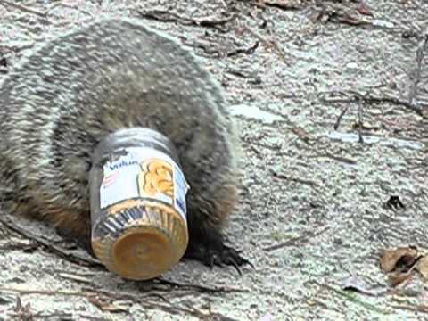 Image result for fat groundhog stuck