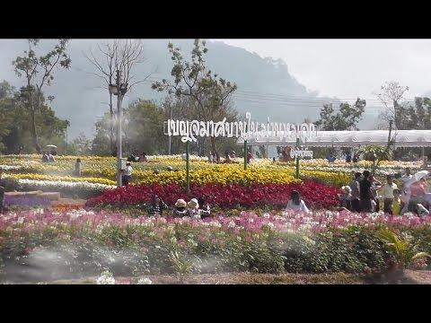 มีดอกไม้มาฝาก - ดอกเบญจมาศบานวังน้ำเขียว ( Chrysanthemum Festival at Wung nam kiew.)