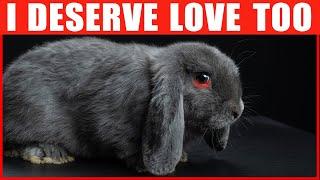 14 Ways to Tęll Your Rabbit You Love Them