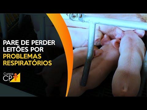 Clique e veja o vídeo Leitões recém-nascidos com problemas respiratórios? Saiba o que fazer e diga adeus às mortalidades!