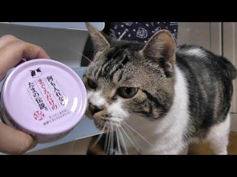 猫缶ごと皿に入れたら困惑顔の猫が可愛い♥ニャーニャーおねだりするリキちゃん【リキちゃんねる 猫動画】Cat video キジトラ猫との暮らし