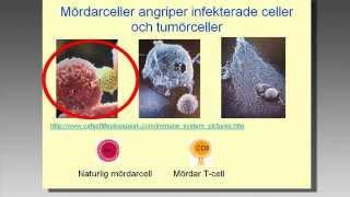 2012-03-15. Immunförsvarets centrala betydelse för hälsa och sjukdom