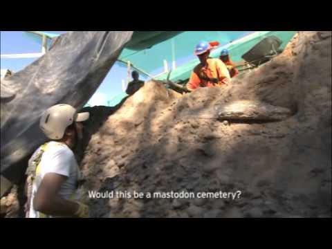 Mastodon Skeleton Discovered On A Chilean Site - SUEZ