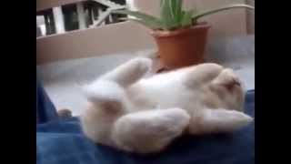 Baby Rabbit sleeps on her back