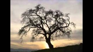 Mein Freund, der Baum - Alexandra